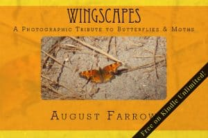 Cover for WingScapes: A Photographic Tribute to Butterflies & Moths